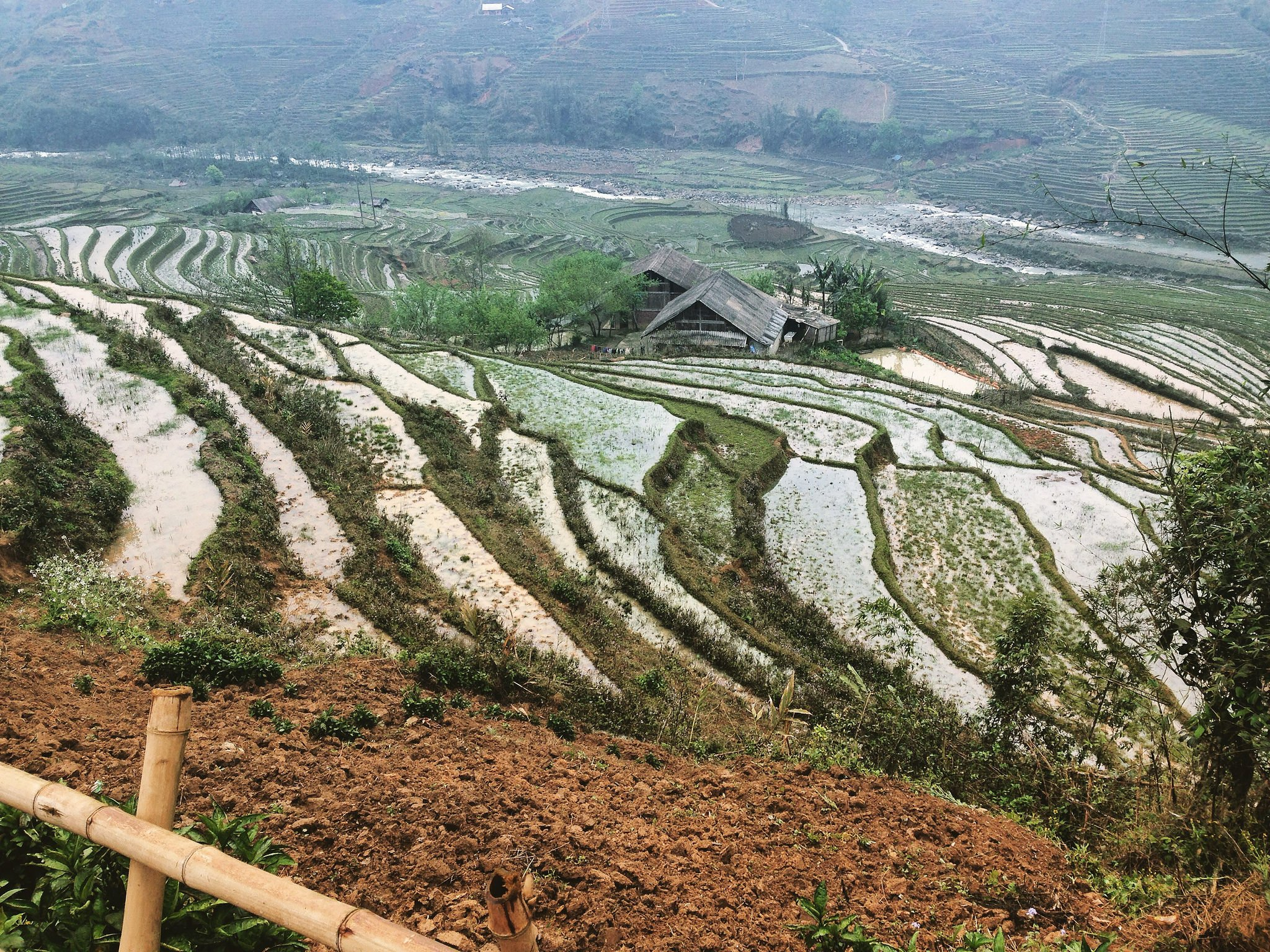 Rice fields in Tan Van village, north west Vietnam